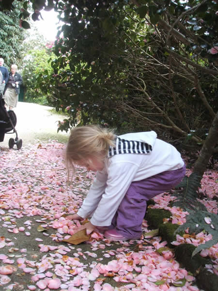 Collecting petals at Heligan